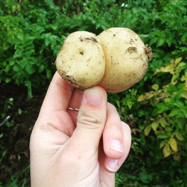 Potato that looks like a bum